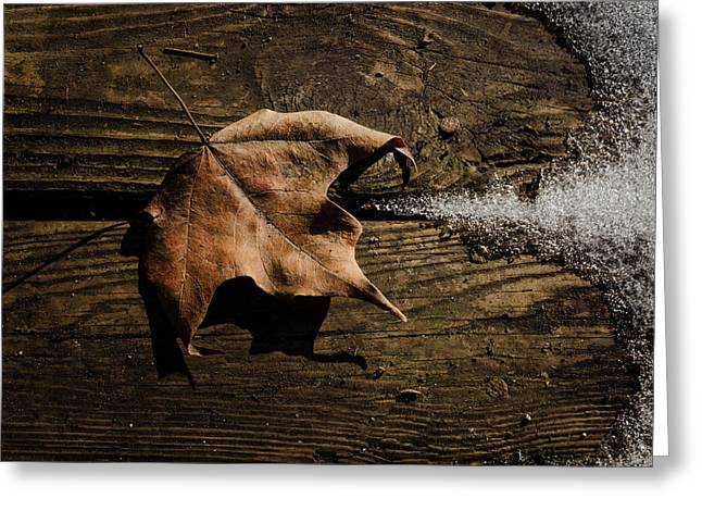 Leaf And Ice Greeting Card