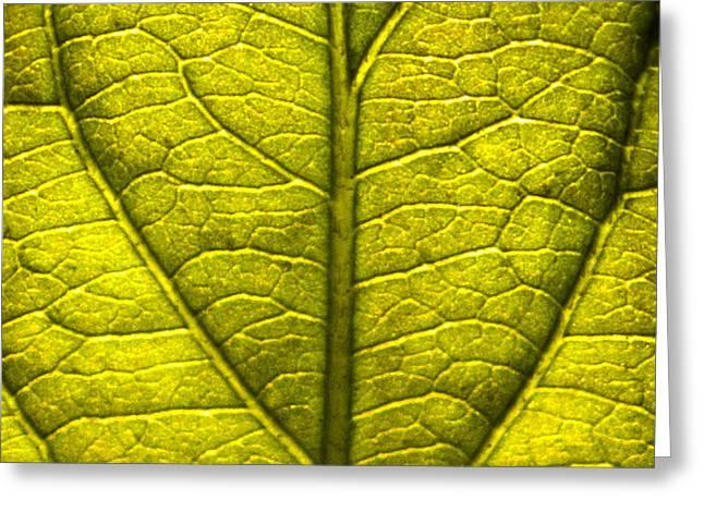 Leaf Art Greeting Card