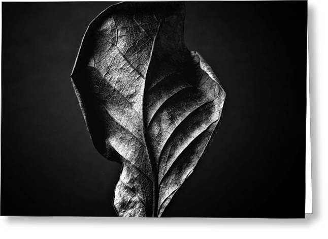 Black And White Nature Still Life Art Work Photography Greeting Card
