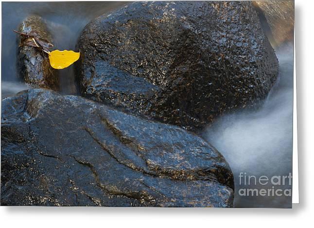 Leaf Bridge One Greeting Card by Vinnie Oakes