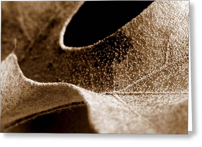 Greeting Card featuring the photograph Leaf Collage 3 by Lauren Radke