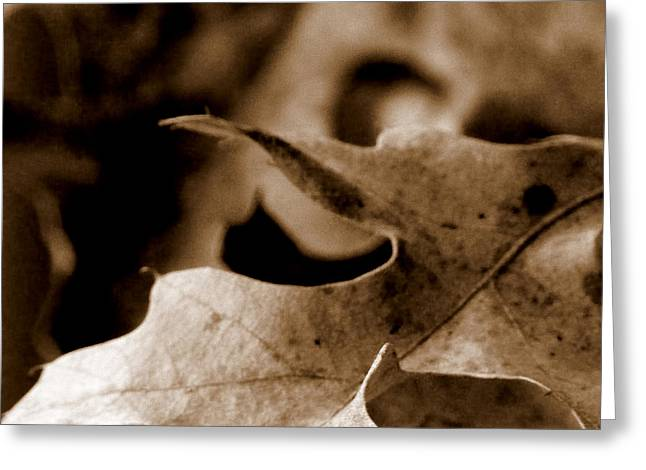 Greeting Card featuring the photograph Leaf Collage 4 by Lauren Radke
