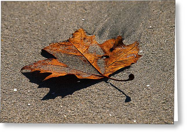 Greeting Card featuring the photograph Leaf Composed by Joe Schofield