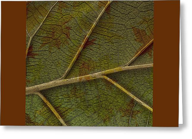 Leaf Design II Greeting Card by Ben and Raisa Gertsberg