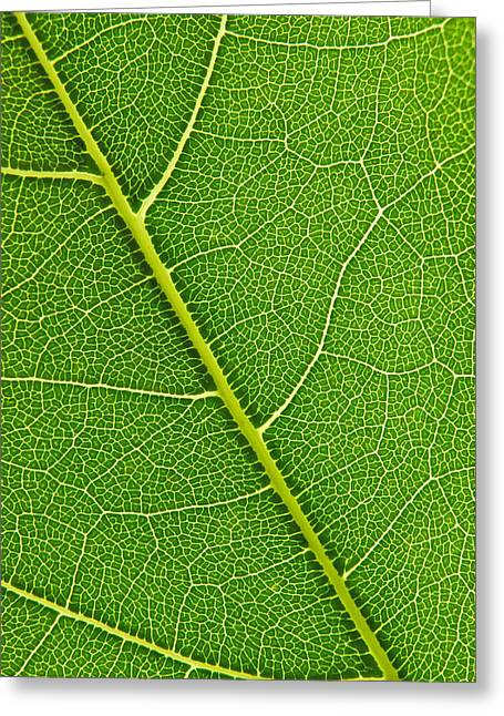 Greeting Card featuring the photograph Leaf Detail by Carsten Reisinger