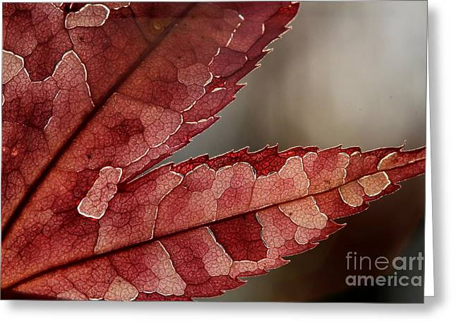 Greeting Card featuring the photograph Leaf Detail by Kenny Glotfelty