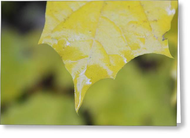 Leaf Drops Greeting Card by Dorothy Hall
