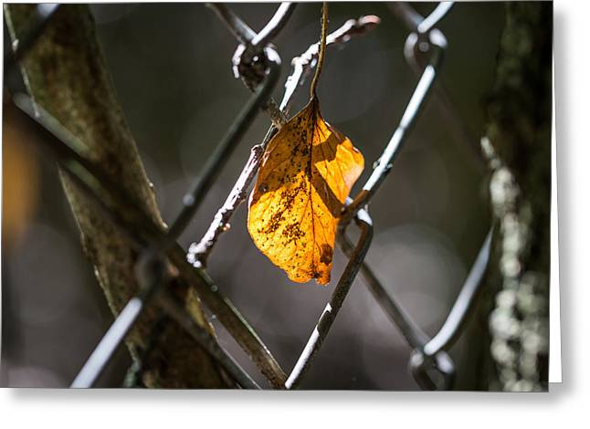 Leaf. Greeting Card