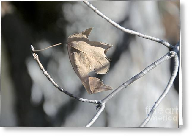 Leaf Harp Greeting Card by Ted Guhl