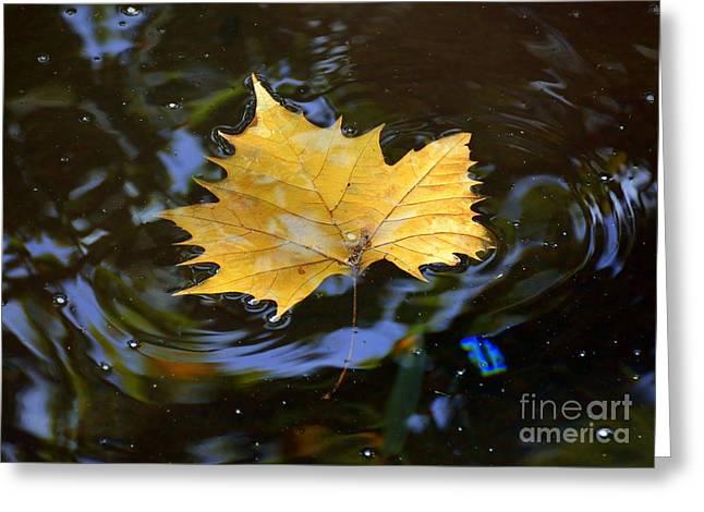 Leaf In Pond Greeting Card by Lisa L Silva