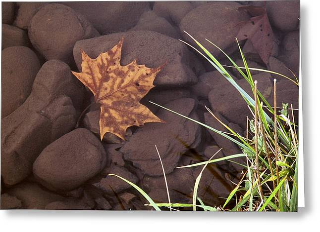 Leaf In The Mountain Fork River Greeting Card