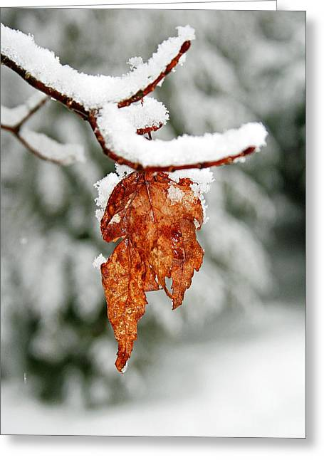 Greeting Card featuring the photograph Leaf In Winter by Barbara West