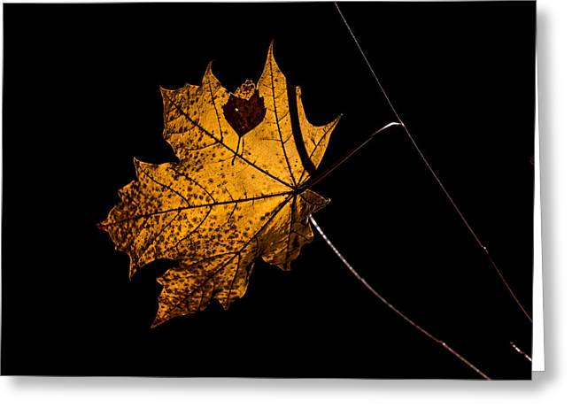 Leaf Leaf Greeting Card by Leif Sohlman