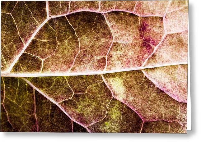 Leaf Lines Greeting Card by Christine Smart