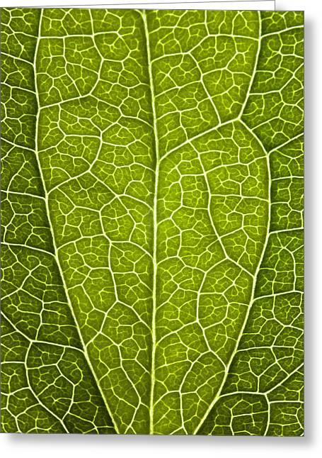 Leaf Lines V Greeting Card by Natalie Kinnear