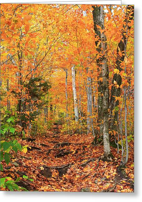 Greeting Card featuring the photograph Leaf Littered Path by Alicia Knust
