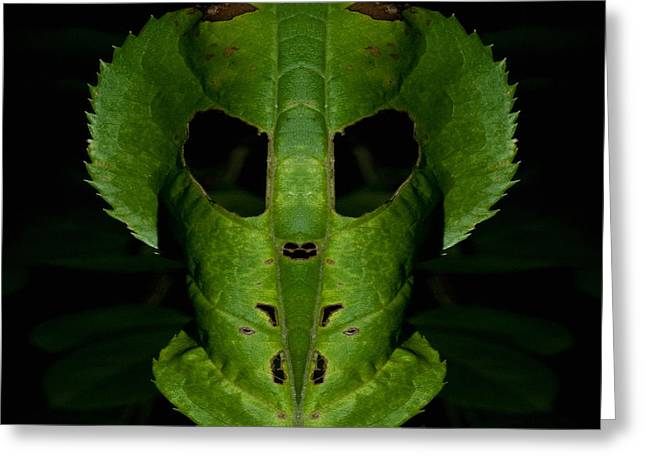 Greeting Card featuring the photograph Leaf Mask by WB Johnston