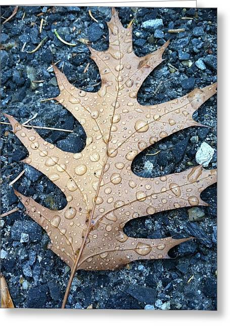 Leaf Greeting Card by Michelle Simard