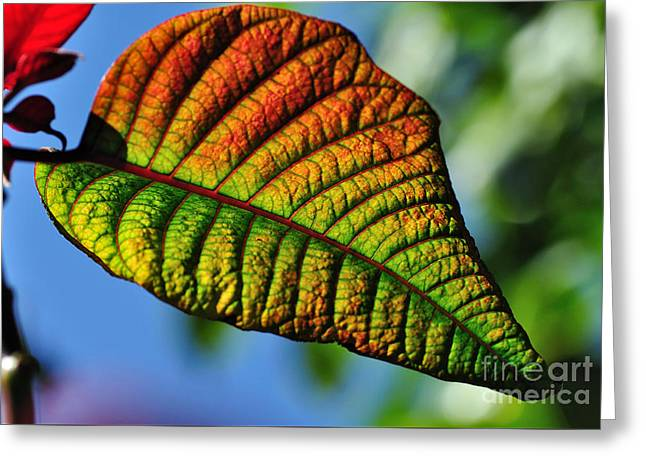 Leaf Of The Poinsettia Greeting Card