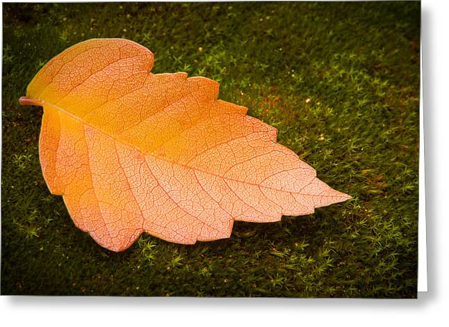Leaf On Moss Greeting Card by Adam Romanowicz