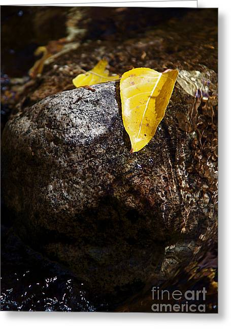 Leaf On Rock Greeting Card by ELITE IMAGE photography By Chad McDermott