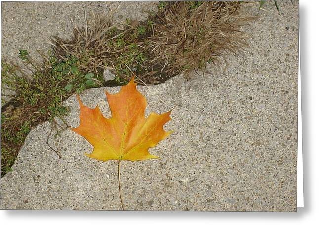 Leaf On Sidewalk Greeting Card by David Fiske