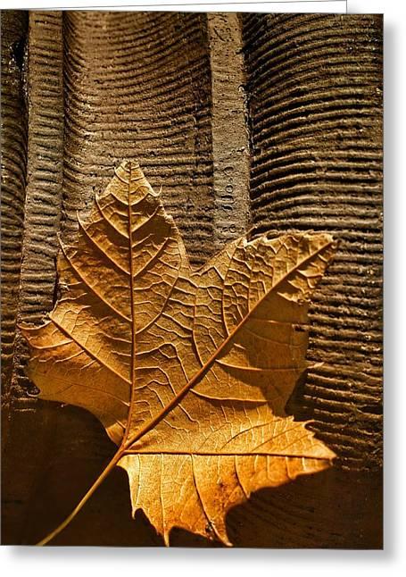 Leaf On Terra Cotta Greeting Card