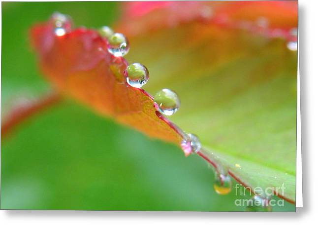 Leaf Pearls Greeting Card