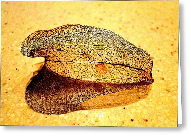 Leaf Skeleton Greeting Card by EdCindy Croal