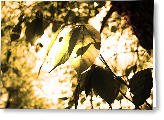 Leaf Space Two Greeting Card