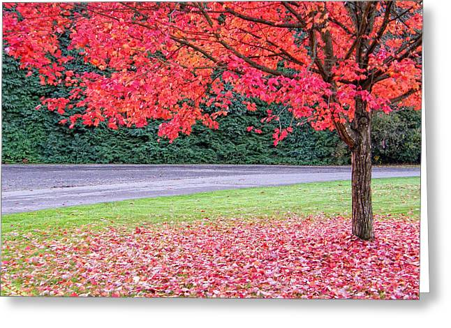 Greeting Card featuring the photograph Leaf With Me by Wendy McKennon