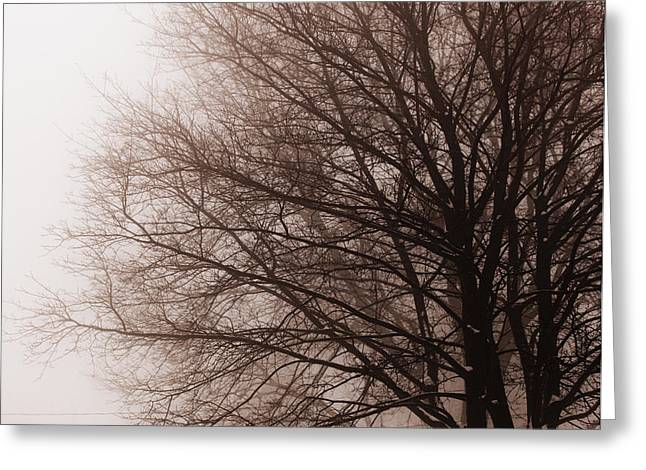Leafless Tree In Fog Greeting Card by Elena Elisseeva