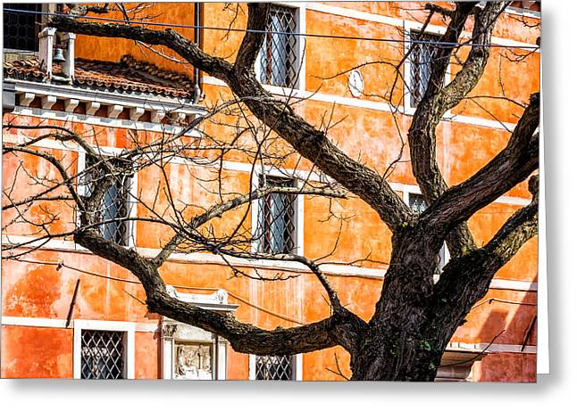Leafless Tree In Venice Greeting Card