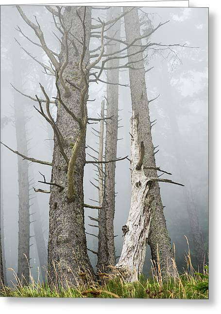 Leafless Trees In The Fog  Cannon Greeting Card