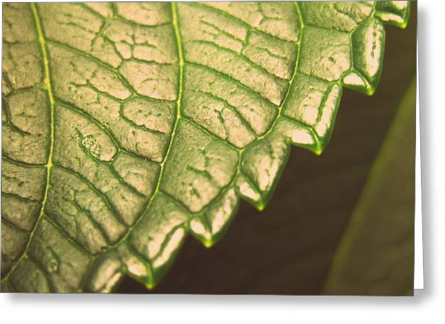 Leaf's Edge Greeting Card by Jhoy E Meade