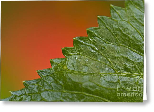 Leafy Greeting Card by Heiko Koehrer-Wagner