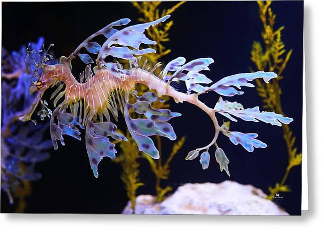 Leafy Sea Dragon - Seahorse Greeting Card by Russ Harris