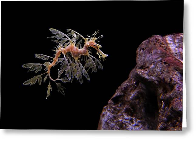 Leafy Sea Dragon Greeting Card by Jonathan Sabin