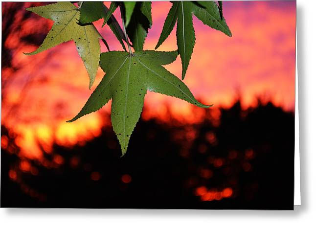 Leafy Sunset Greeting Card by Sabre Tooth
