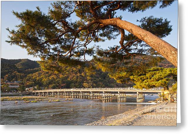 Leaning Pine Tree Arashiyama Kyoto Japan Greeting Card by Colin and Linda McKie