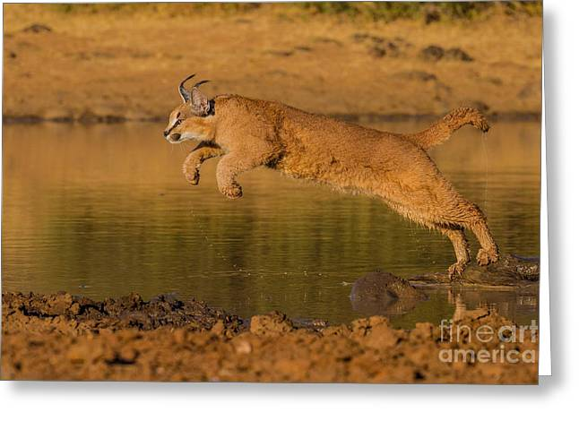 Leap Of Faith Greeting Card by Ashley Vincent
