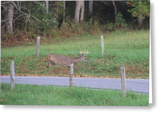 Leaping Buck In Cades Cove Greeting Card by Dan Sproul