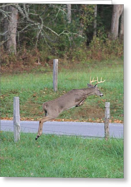 Leaping Buck In Smoky Mountains Greeting Card
