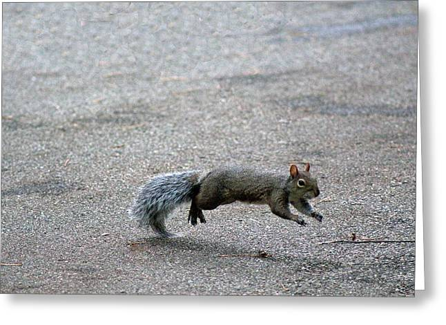 Greeting Card featuring the photograph Leaping Squirrel by Lorna Rogers Photography