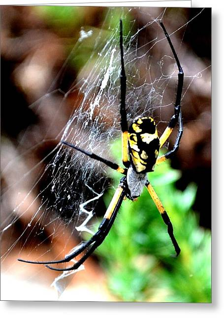 Leave The Writing To The Spider  Greeting Card