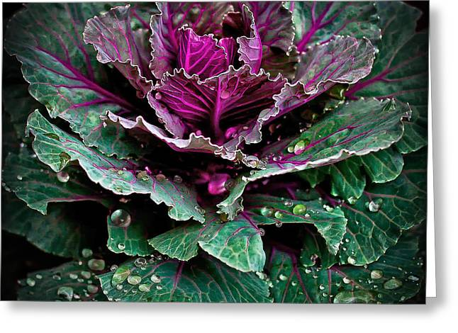 Decorative Cabbage After Rain Photograph Greeting Card