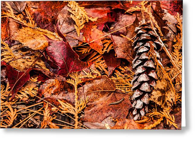 Leaves And Pine Cones Greeting Card