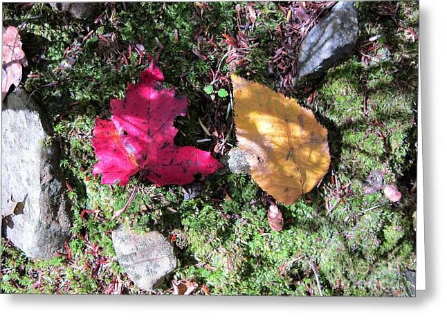 Leaves And Shadows Greeting Card by Linda Marcille