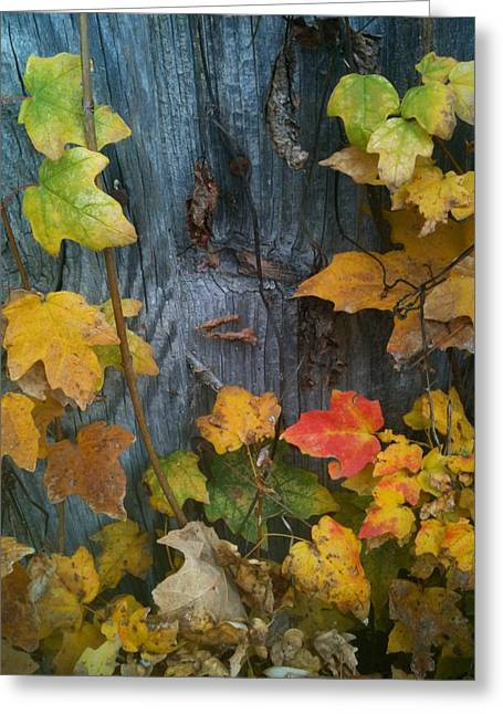 Leaves And Shed Greeting Card by Charles Morford