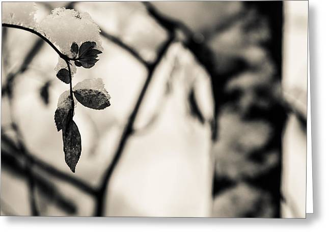Leaves And Snow Greeting Card by Andreas Levi